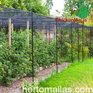 chicken netting used to keep birds off an orchard