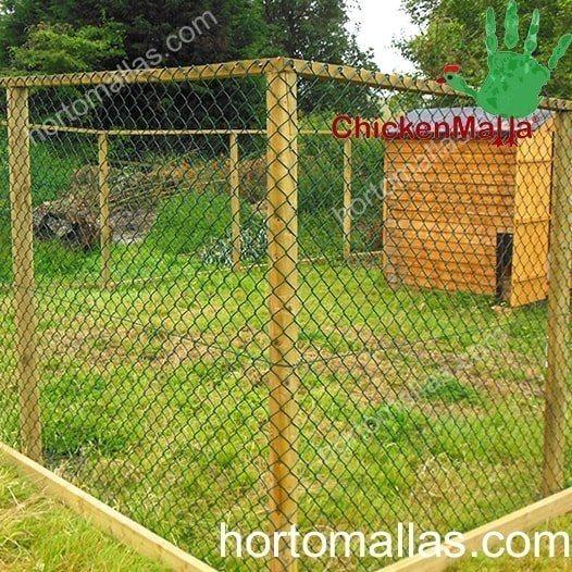 Cómo criar pollos de campo libre