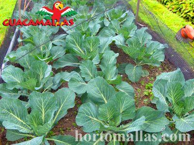 Obtenha melhores colheitas com a proteção da rede anti-pássaros GUACAMALLAS