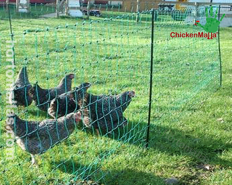 Proteja sua criação de frangos com a proteção da malha/rede para frangos/galinhas CHICKENMALLA