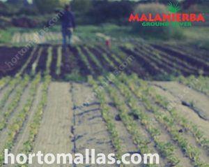agricultor trabajando sobre tejido ground-cover