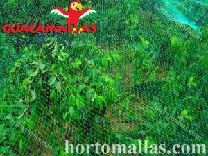 anti bird netting over trees