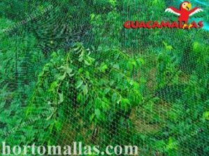 aviary net on crops