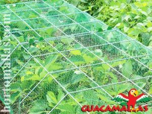 anti bird netting or aviary netting used as butterfly protection