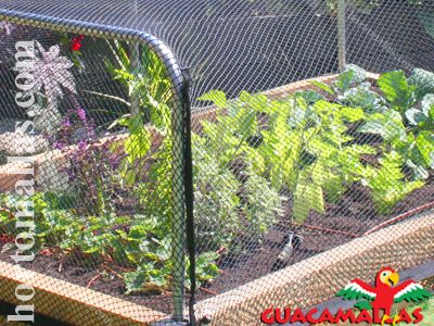 Care for Your Garden by Protecting It with Plant Netting