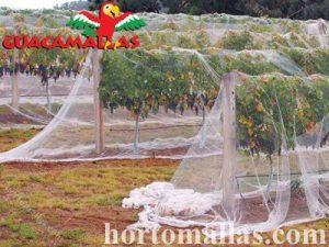anti bird netting over grape vines