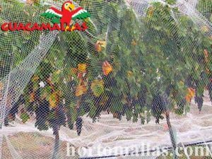 aviary netting used on grapes to protect them from birds