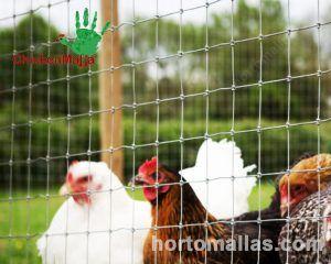 pollo libre en corral con malla pollera