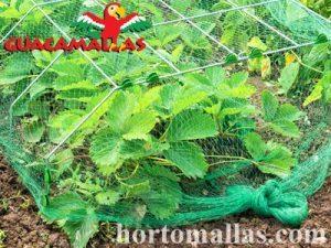 hortalizas con protección de red anti-pájaros