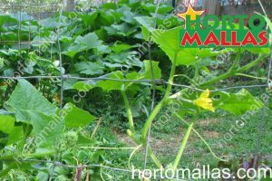 cultivo de hortalizas con HORTOMALLAS