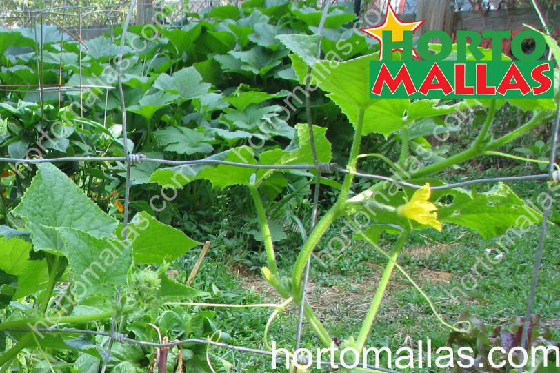 Best price of plant support net: HORTOMALLAS for climbing vegetables and flowers