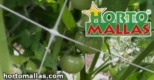 Malla para tutoreo en campo de tomates