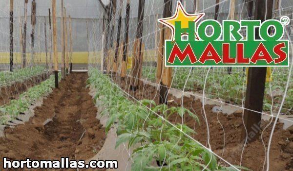 Este método também funciona para plantas trepadeiras de grãos.