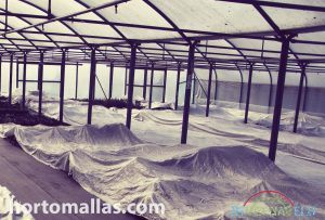 frost protection fabric used inside a greenhouse
