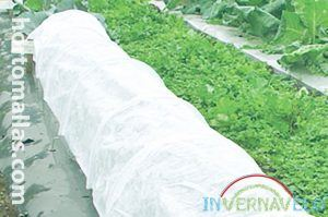 growing tunnels made with row covers