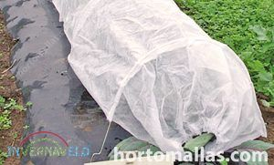 frost protection tunnels are used commonly for vegetables