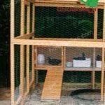 Caseta avícola para la cria de pollos orgánicos