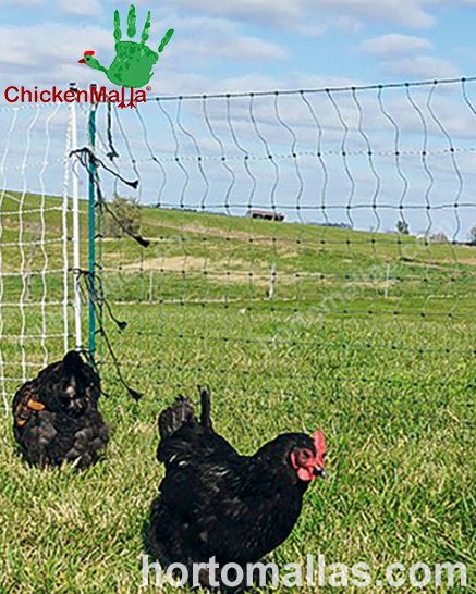 A CHICKENMALLA® é ideal para delimitar áreas em seu galinheiro