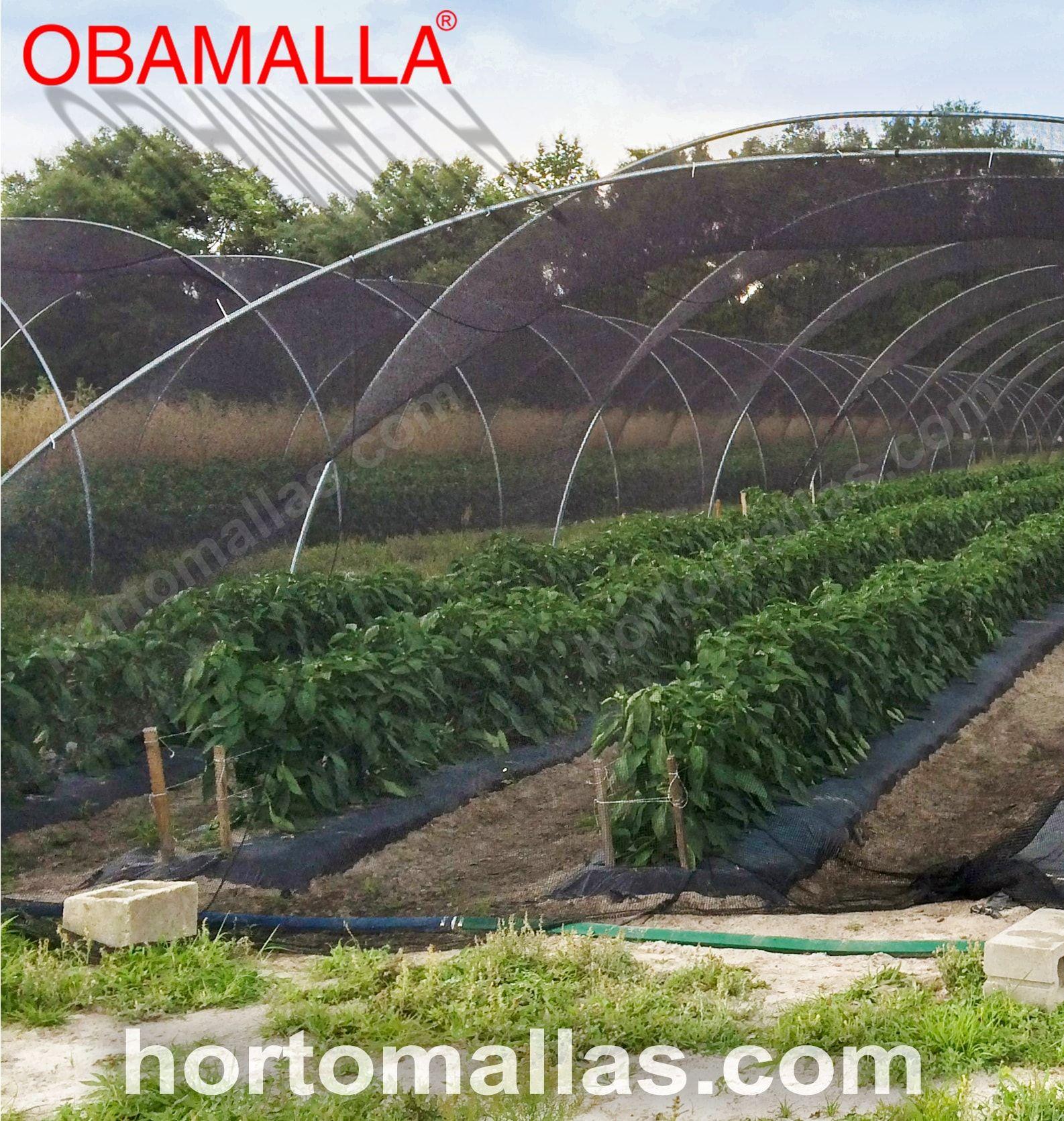 Macro túnel coberto com malha/rede de sombra, cria o ambiente perfeito para o cultivo.