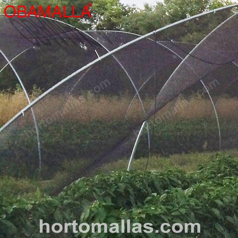 Outro exemplo de macro-túneis com casa de sombra, esta técnica ajuda a reduzir os danos causados pelos raios UV