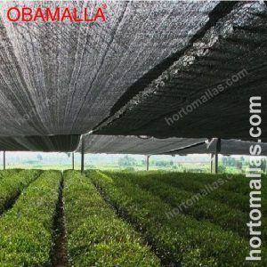 hortalizas con media sombra OBAMALLA