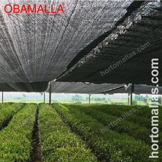 Cultivo em campo aberto com meia sombra OBAMALLA®, esta difunde a luz que incide em suas hortaliças