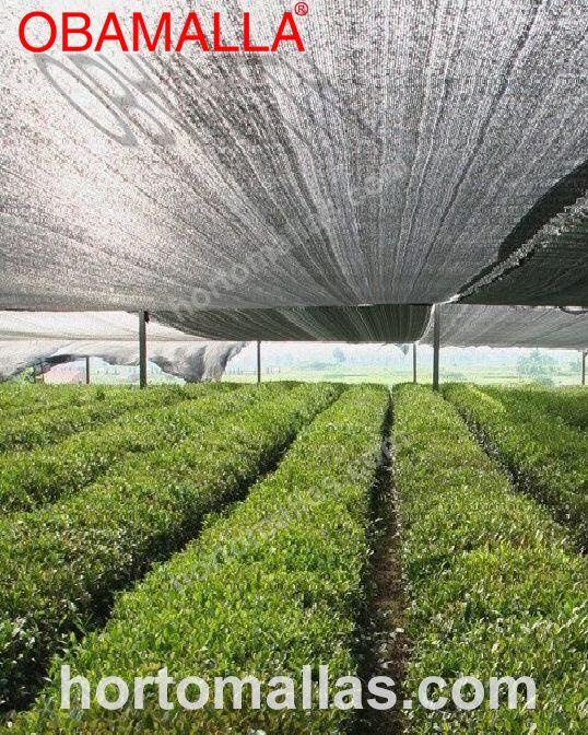 Com a instalação adequada, grandes áreas de terra podem ser cobertas com meia sombra OBAMALLA