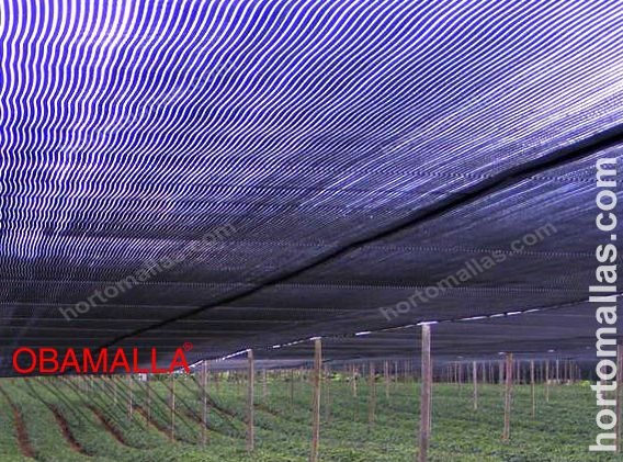 OBAMALLA, the best price of shade netting for the control of your crop
