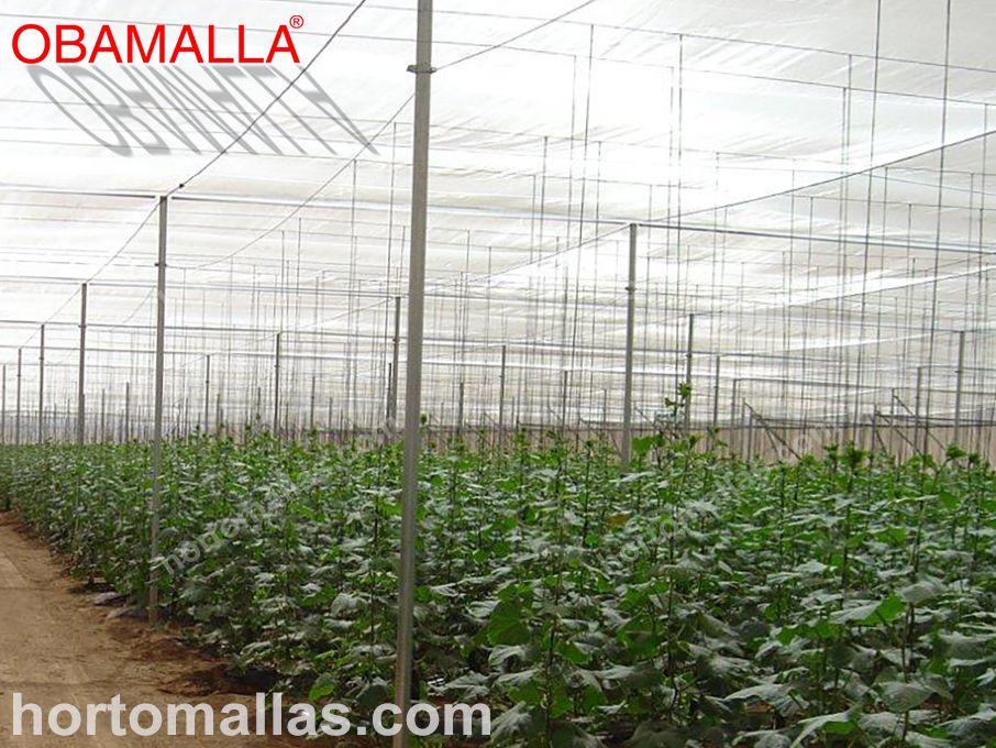 Algumas hortaliças/vegetais são beneficiadas de maneiras diferentes devido à cor da malha/rede com a qual o sombreamento é realizado.