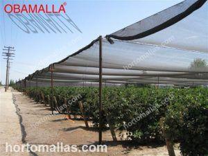 cultivo en campo abierto con casa sombra