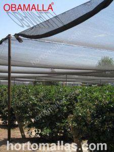 cultivo protegido de los rayos UV