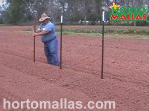 posts used for cucumber support trellis netting