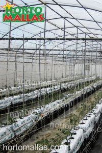 hydroponic greenhouses uses trellising nets