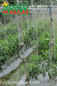 knotted diagonal cucumber net