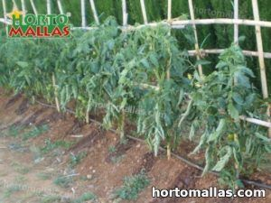 vertical support system applied on plants