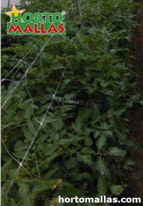 vertical trellis support used in garden