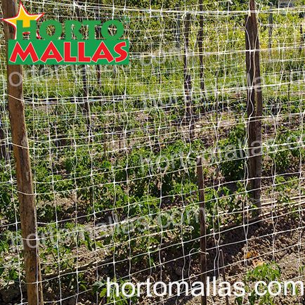 Tomato cultivation with HORTOMALLAS® nylon net