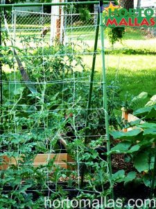 backyard trellises can be made our¿t a variety of materials