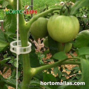 planta de tomate usando clips y red de soporte
