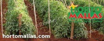 O aplicativo tem como objetivo impulsionar as exportações dos agricultores.