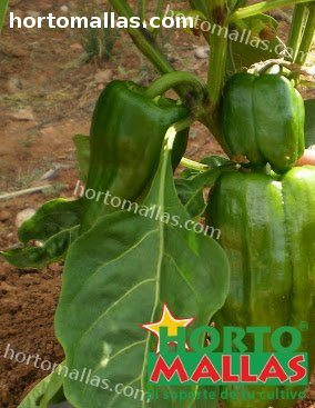 App precios de hortalizas: precios de hortalizas y frutas on-line
