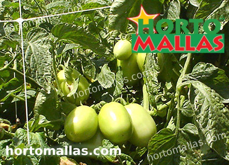 Rete di supporto per traliccio HORTOMALLAS installata in colture da giardino