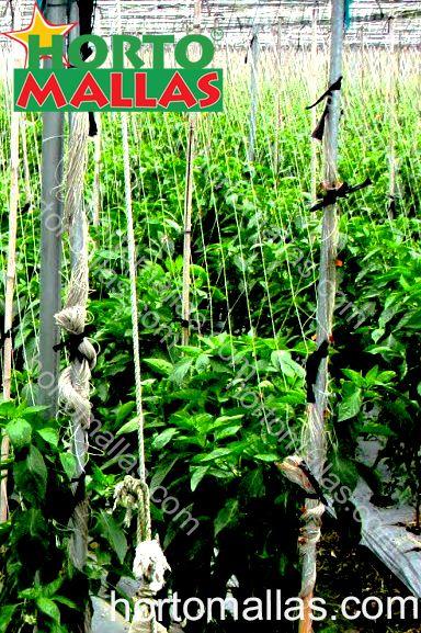 Emparrado de hortícolas con malla a cuadros Hortomallas