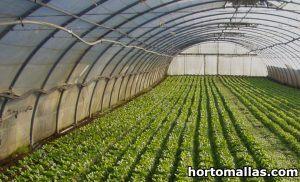 Invernadero instalado en campo de cultivos