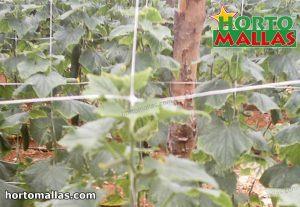 rete a traliccio verticale installata sul giardino
