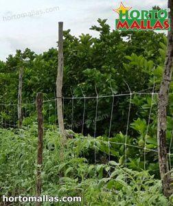 sistema di supporto verticale installato sul campo per il tutoraggio delle piante