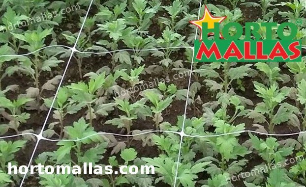 vegetables with support net