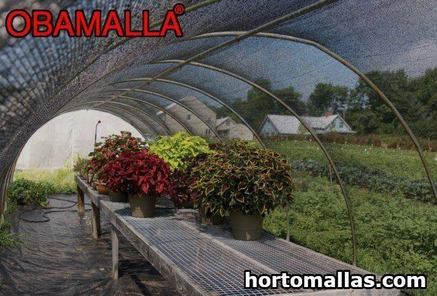 Seus cultivos de flores podem ser protegidos dos raios solares excessivos sob a proteção da malha/rede de sombra OBAMALLA.