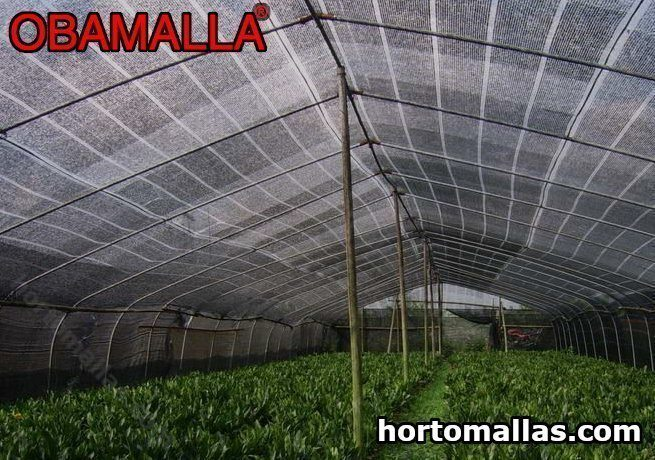 A estrutura W-Truss começou a ser usada porque não protege apenas seus cultivos dos raios solares.