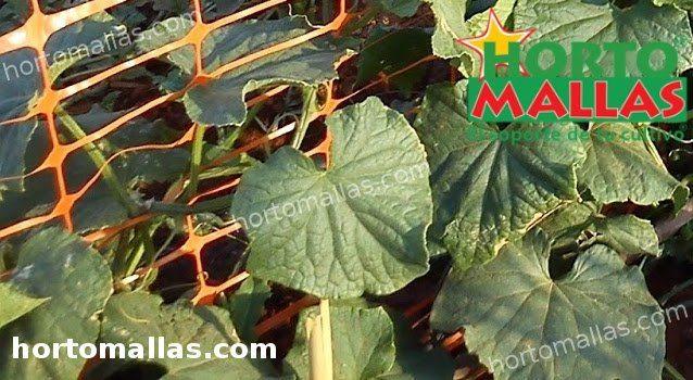cultivo de plantas con malla, app precios hortalizas.